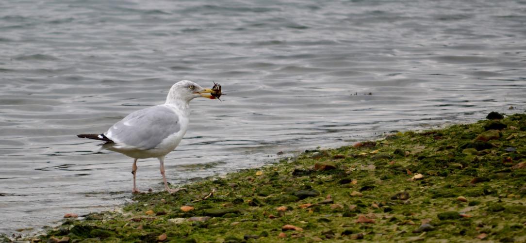 Bird with crab